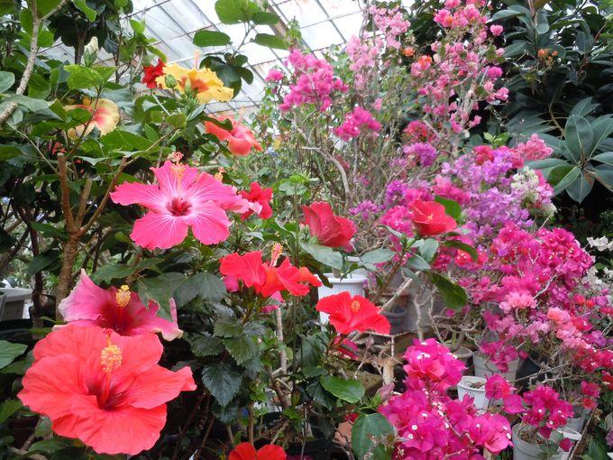 365日美しい花を咲かせている花の楽園!