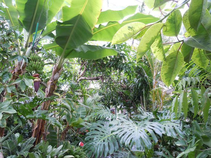 温泉パワーを受けて、強力に育つ素晴らしい植物達!!