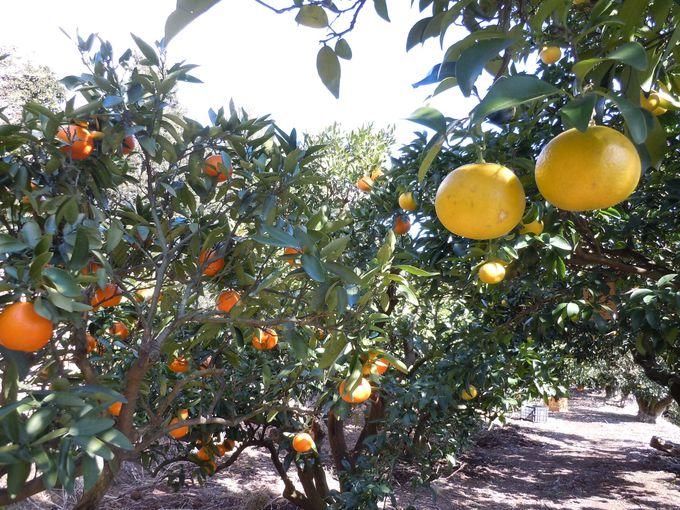 果物好きにはたまらない!月替わりで楽しめる果実