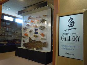 """200点もの""""魚剥製ギャラリー""""がある!?伊豆松崎「豊崎ホテル」"""