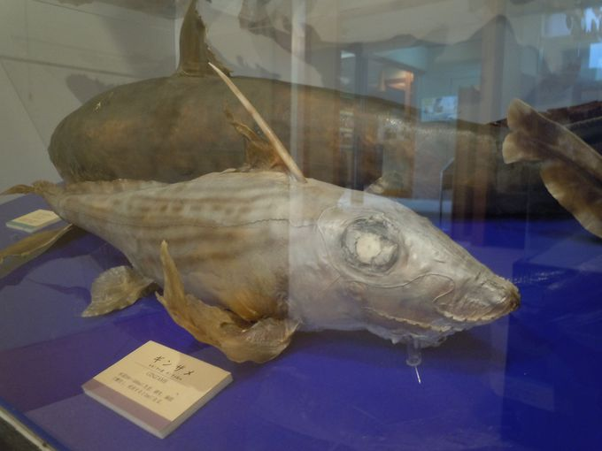 深海からやってきた!レア度満点の不思議な魚も展示公開中!