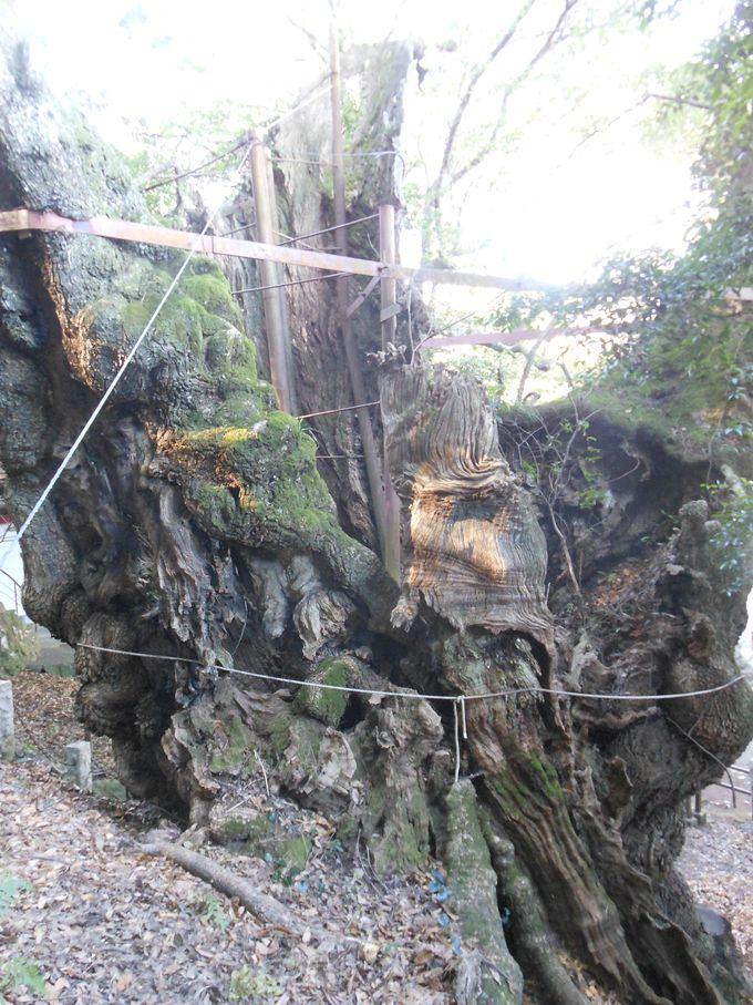 精霊やどる!!神秘の巨樹