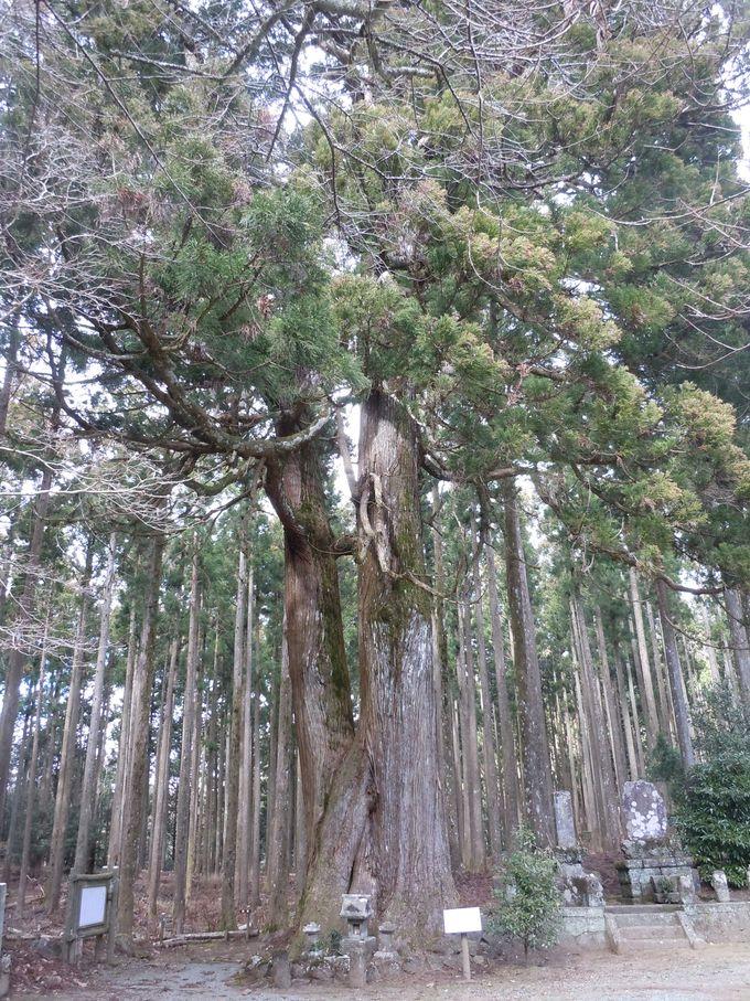 森の中で体感できる!心や体の清浄