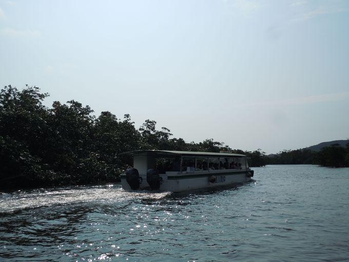 野性味溢れる原生林の島