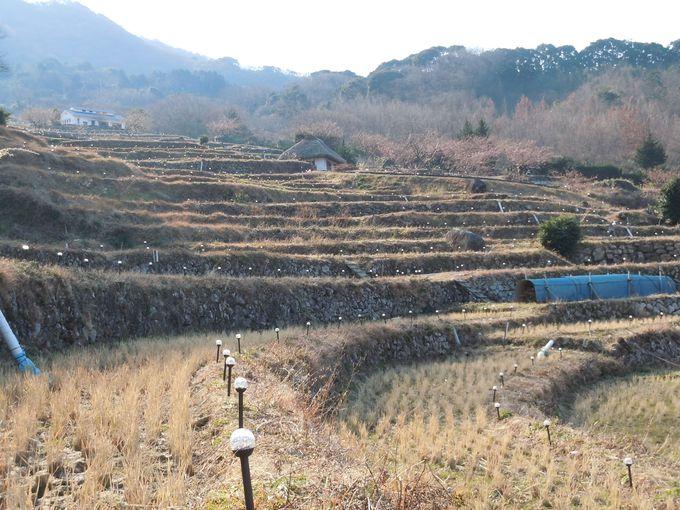 日本の原風景が広がる!美しい棚田!