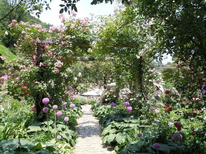 美しい庭園の主役はバラだけじゃない!