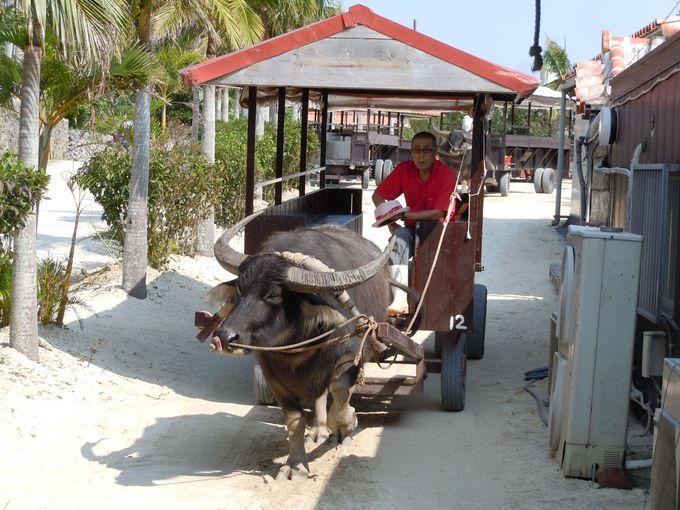 赤瓦が美しい街中をめぐる水牛車