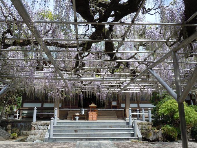 伊東七福神巡りの一つの福緑寿「林泉寺」