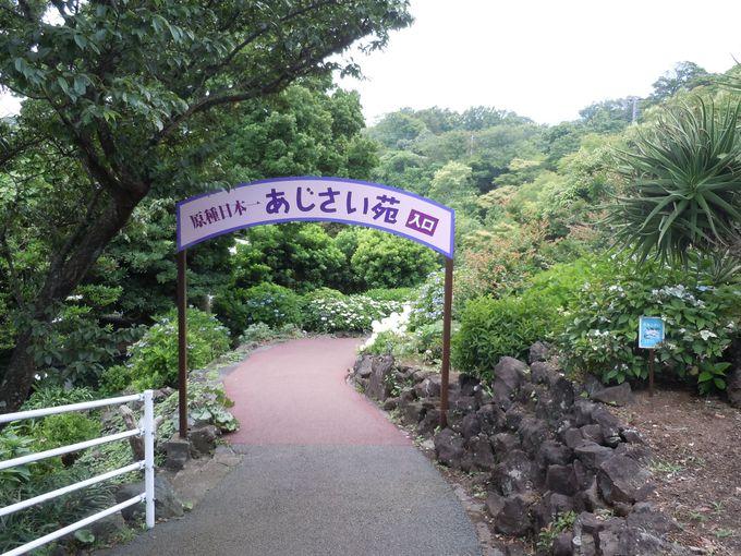 2006年5月にオープンした日本原種日本一のあじさい苑