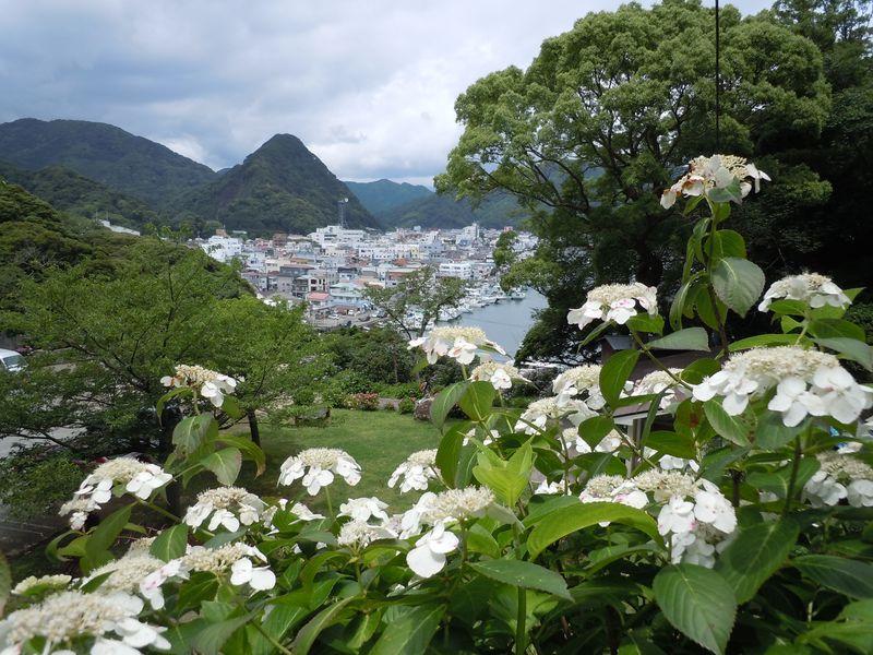 初夏を告げる色彩豊かな紫陽花園!伊豆・下田公園「あじさい祭」
