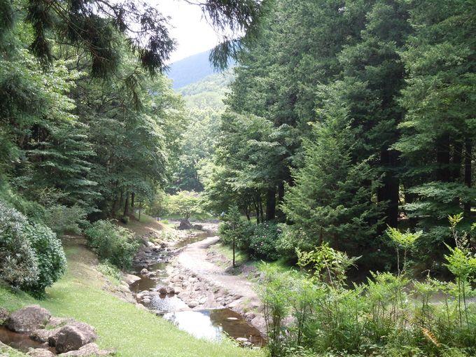 集い・憩い・自然と対話できる美しい公園