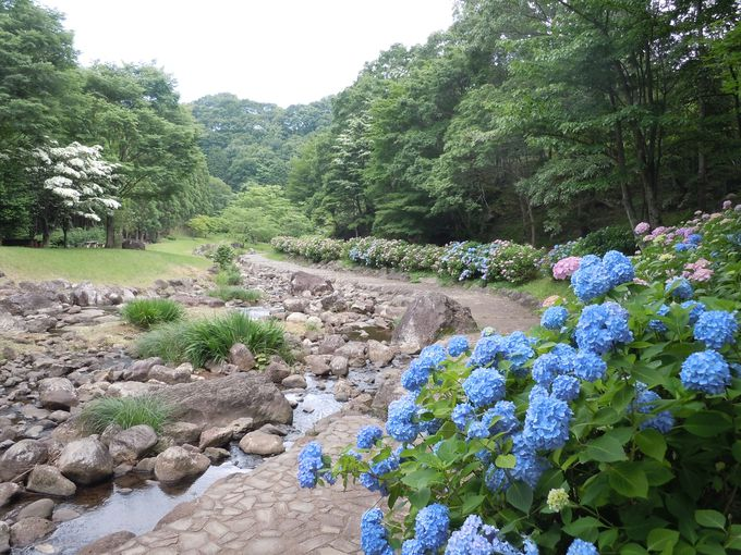 四季折々の景色も楽しめる!森の中で目を引く美しい花