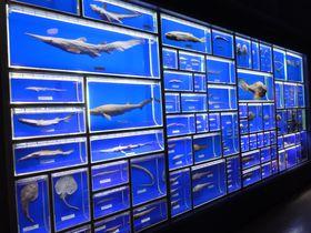 日本唯一の海洋学部付属水族館!静岡市「東海大学海洋科学博物館」