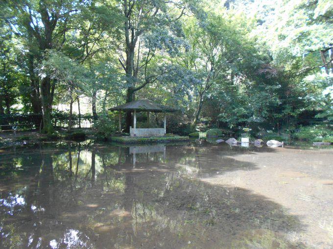 織りなす自然が美しい!緑豊かな日本庭園「大川竹ヶ沢公園」