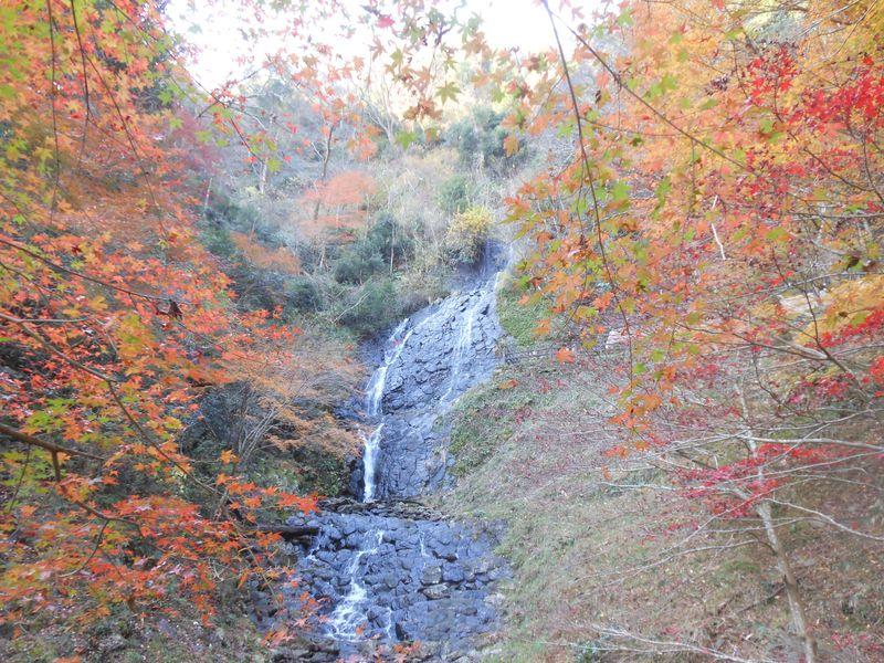 伊豆で見つけたっ!知られざる穴場な紅葉スポット「旭滝」