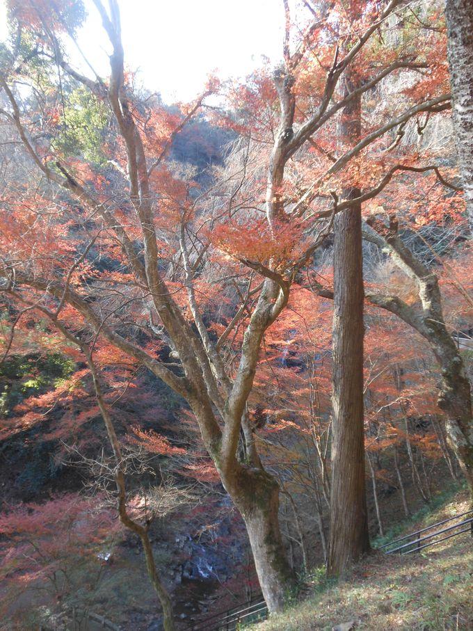 散策しながら愛でる美しい紅葉