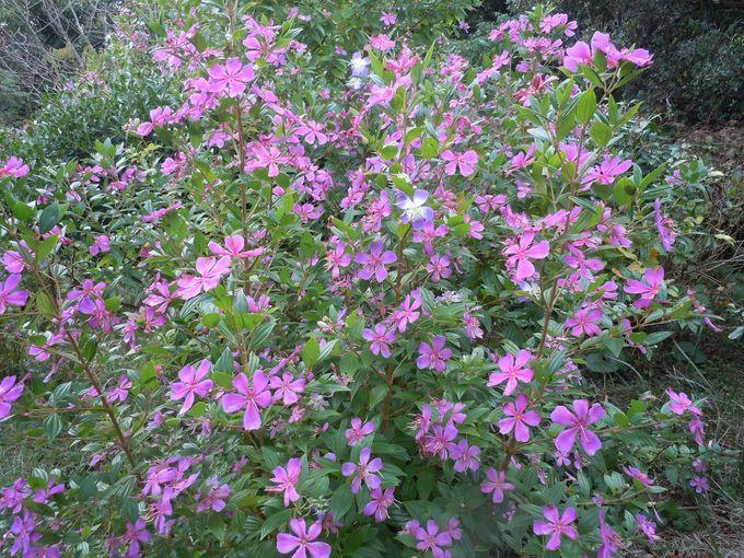 植物の神秘が隠された!同時に3色咲かせる魅惑の花