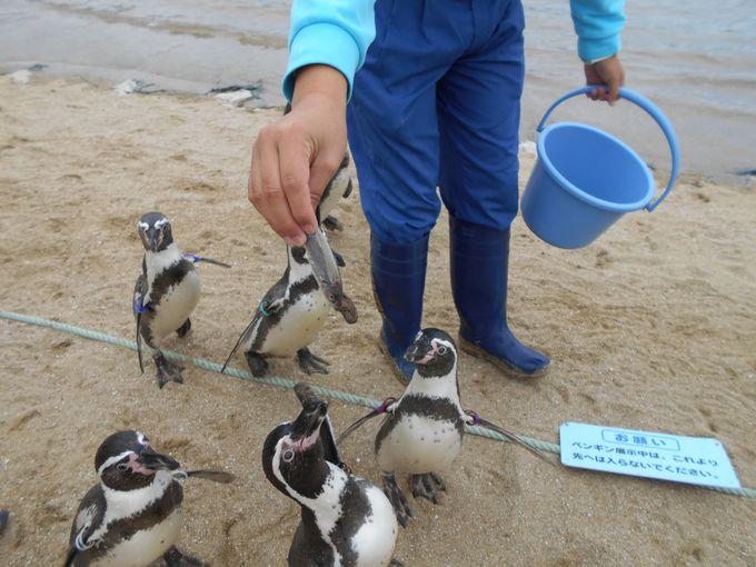 4.長崎ペンギン水族館