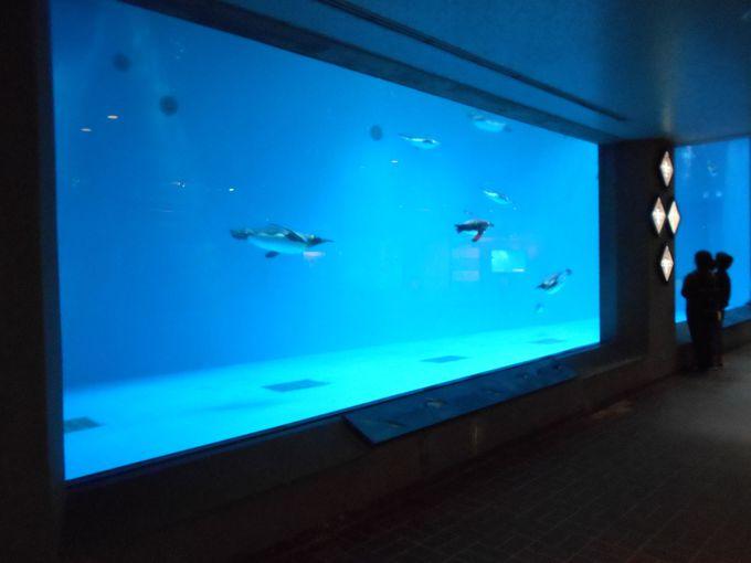 一見の価値あり!世界でも類を見ないペンギンにこだわった水族館