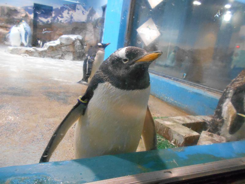 世界最多!9種類のペンギンを飼育展示「長崎ペンギン水族館」