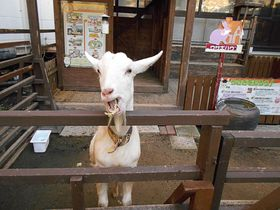 無料サービス満載で飽きない温泉ホテル!長崎・島原「南風楼」