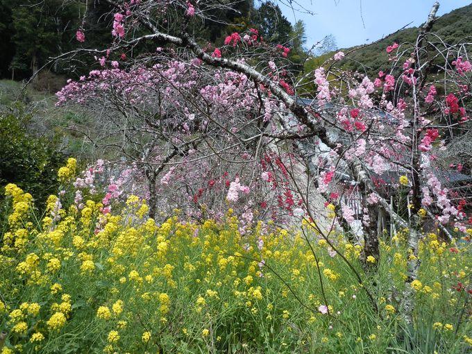 春爛漫を満喫できる最高の風景