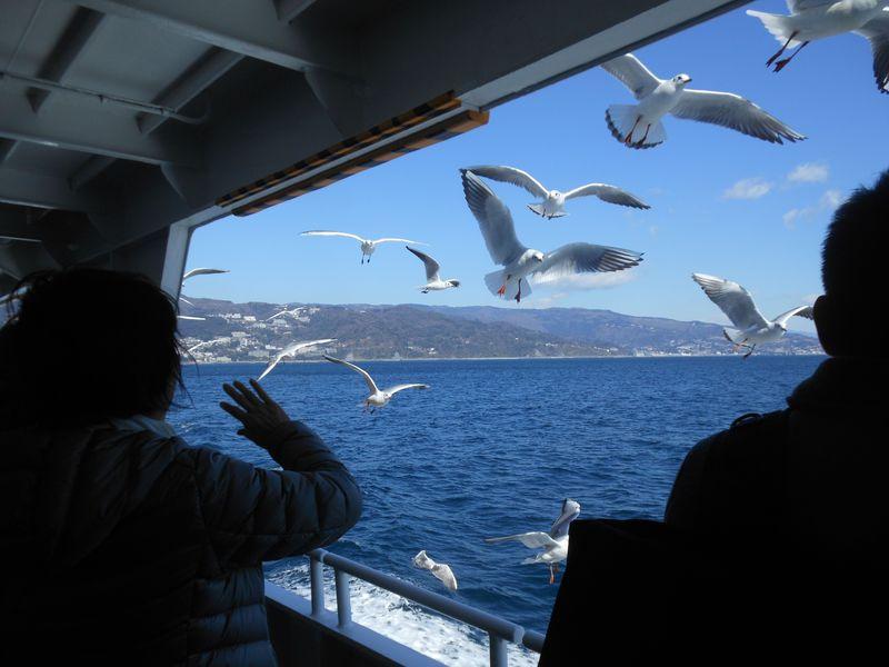 冬の風物詩!熱海初島・定期船で楽しみたいユリカモメの飛来
