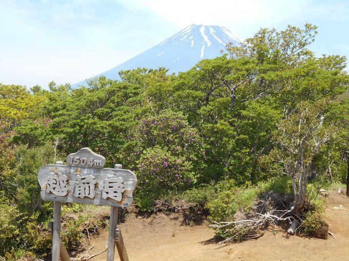 富士山・ツツジなどなど、山頂からの眺めも見逃せないっ!
