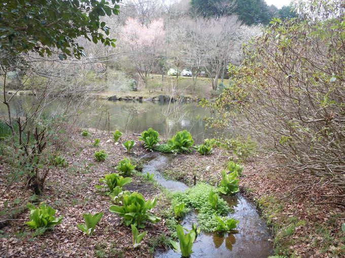 自然と調和した、安らぎの水辺で季節の移ろいを体感