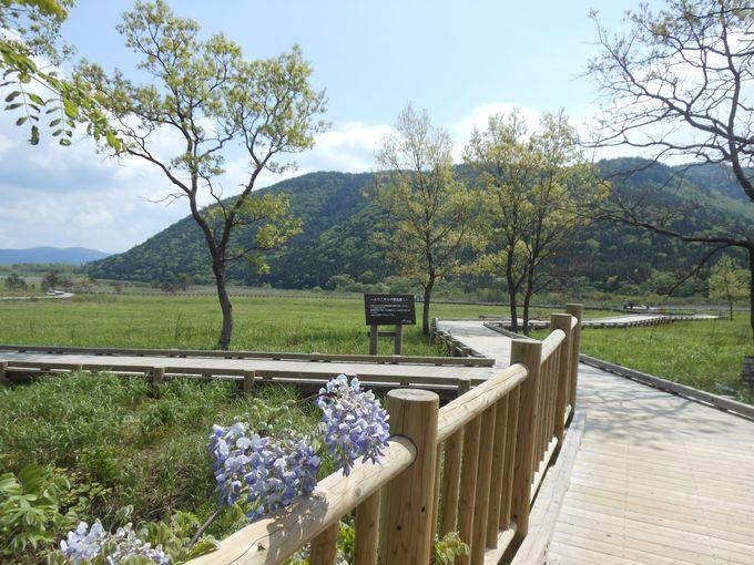 国際的に重要な湿原を体感できる!選べる散策ルート