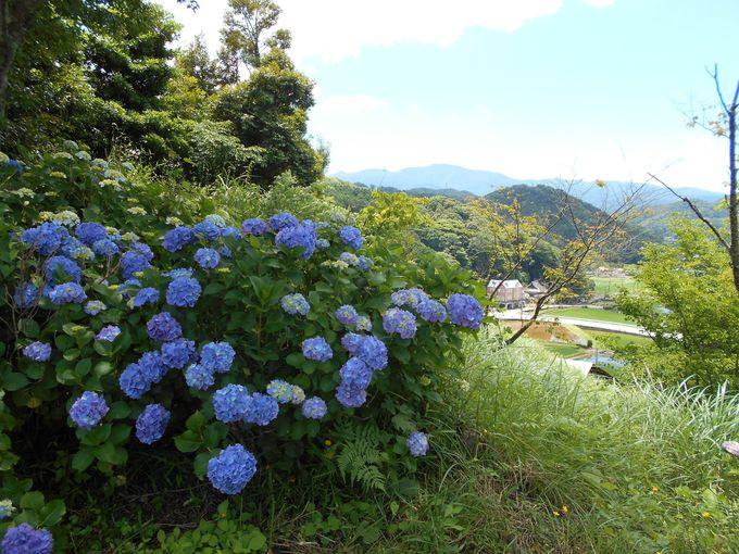 のどかな里山の風景に癒される「六仙の里」