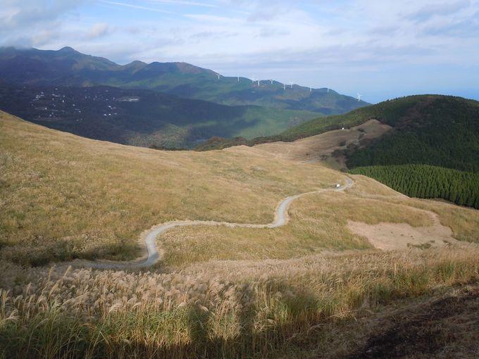 定番のススキの見所からツリーハウス、風通し抜群の穴場スポットもある「稲取細野高原」