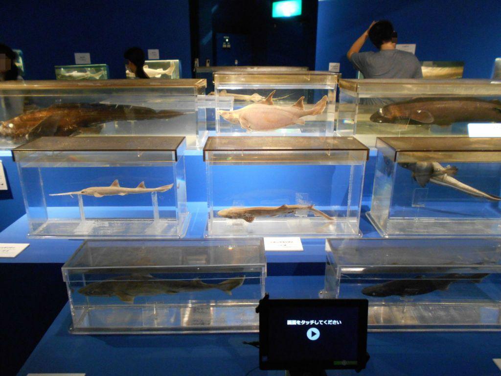 世界有数の深海魚を展示!沼津市戸田「駿河湾深海生物館」