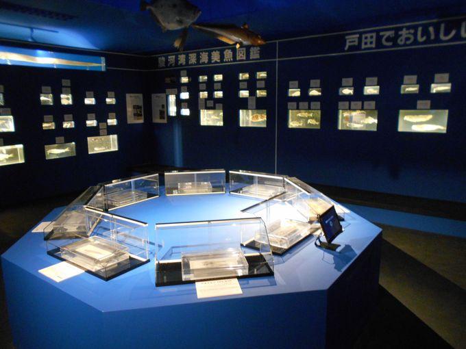日本が世界に誇る!駿河湾で捕れたホンマモンっの深海生物