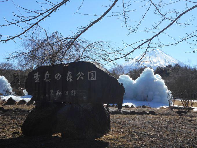 山梨を代表する冬の風物詩「西湖樹氷まつり」