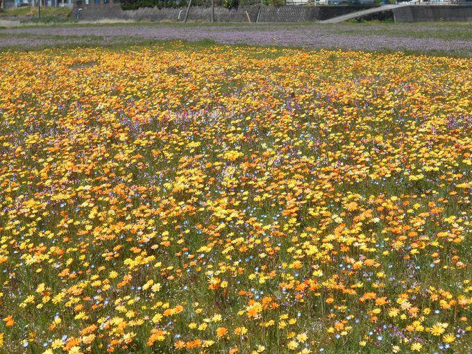 田んぼで、ほのぼののんび〜り花摘み
