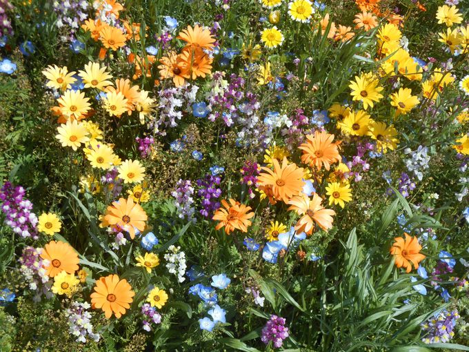 あなたはどの花を狩りますか?バリエーションに富んだ花