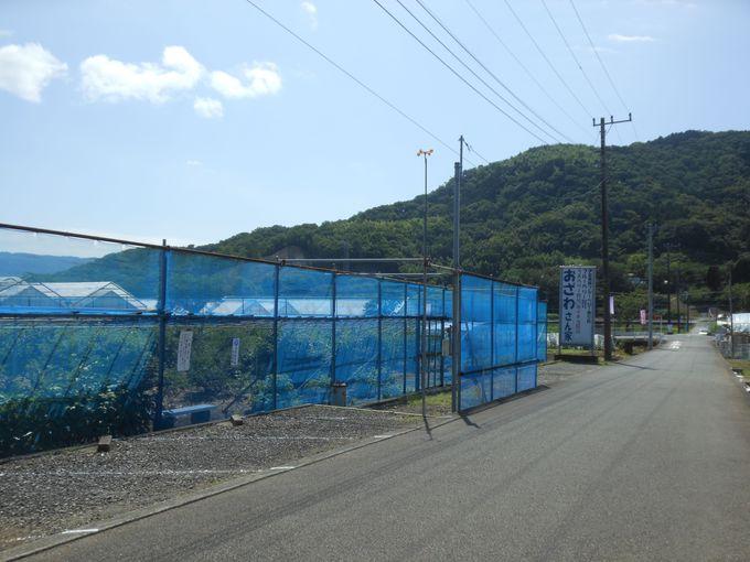 伊豆長岡温泉街の入り口に位置!アクセス便利な「おざわ農園」