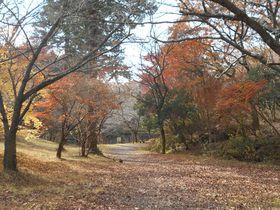 富士山の溶岩流上にある紅葉スポット!富士市「丸火自然公園」