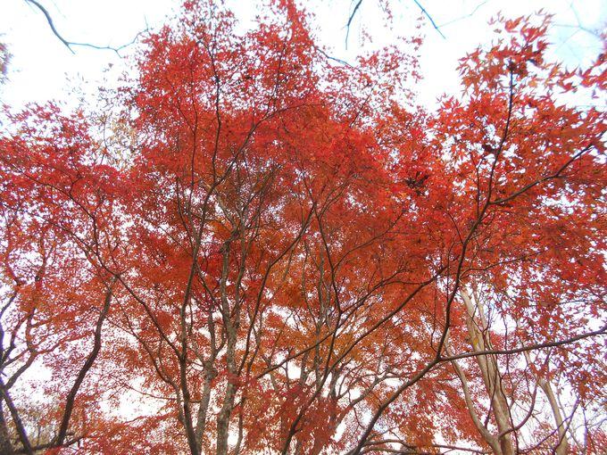 自然の中で出会う!心まで染みる紅葉