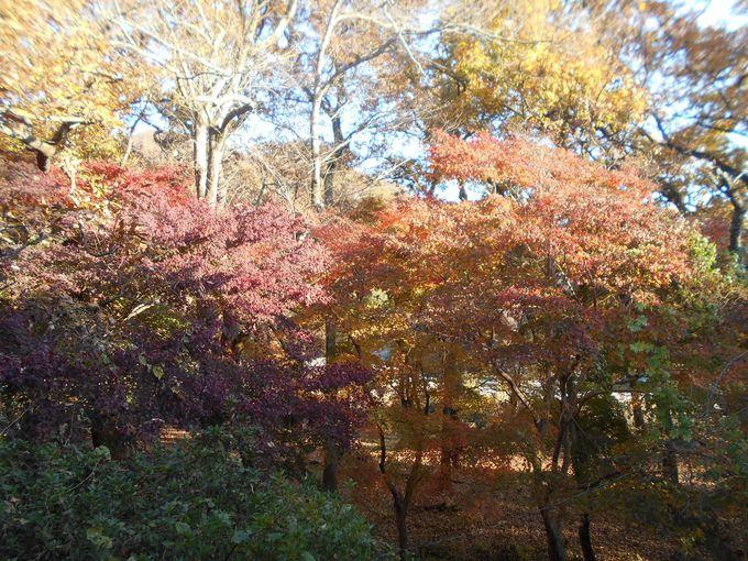 自然林の色彩と瀬音を楽しむ!癒しみの客室