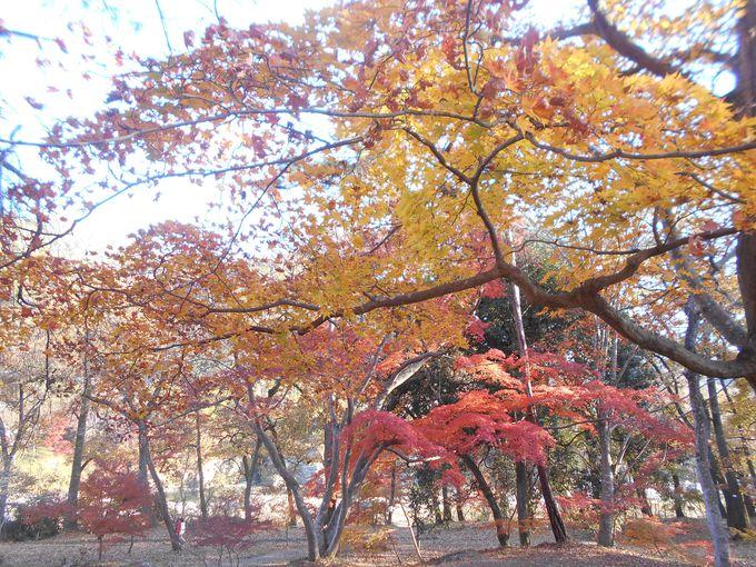宿から至近!紅に染まる鮮やかな景観が見事な「月の石もみじ公園」