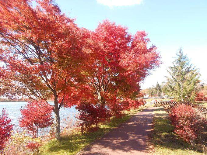 紅葉がエスコート!秋色に染まる遊歩道