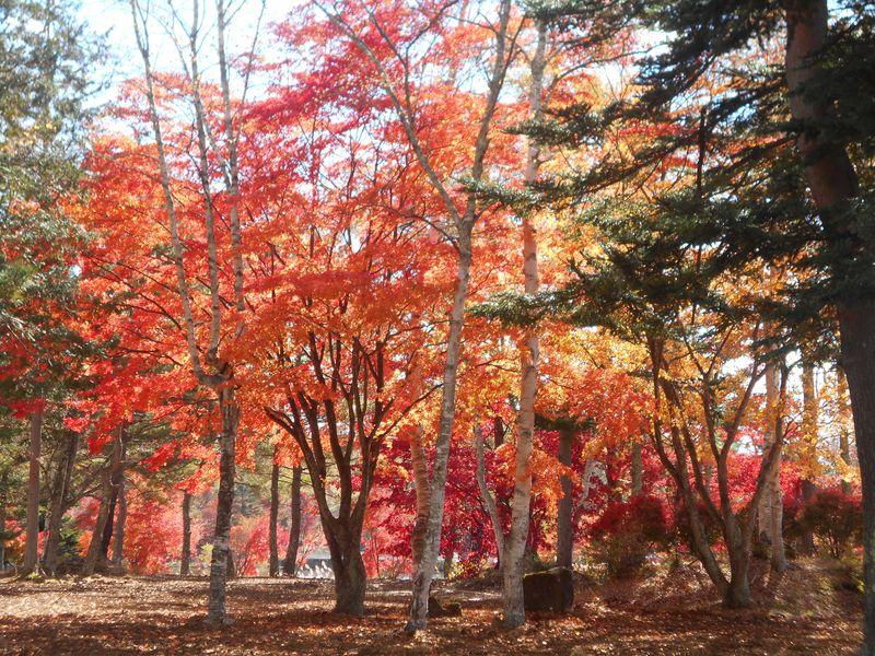 静かな湖畔で愛でる!一足早い信州の紅葉は「蓼科湖」へ