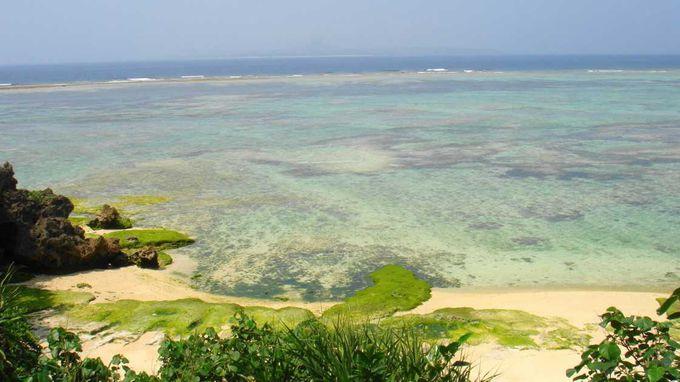 第4位 海洋博公園 亀の浜