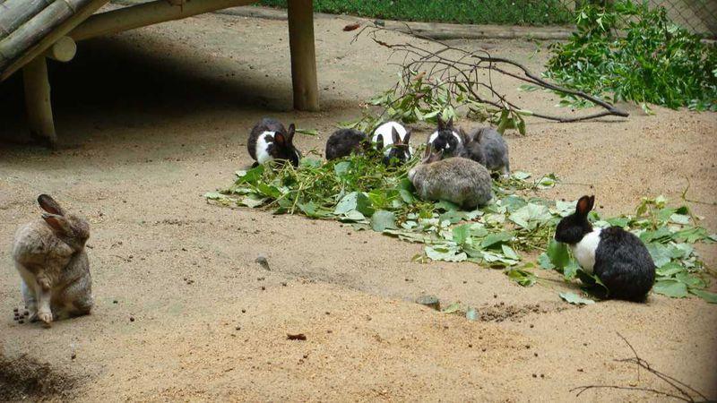 うさぎさんに会いに神戸市立森林植物園へ!弓削牧場のミルクソフトも美味♪