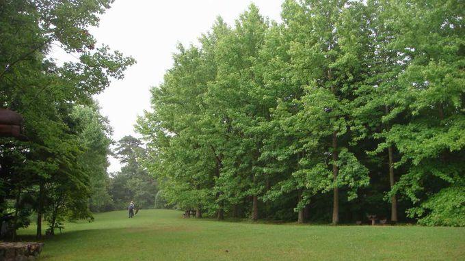 世界の森を散策♪紅葉シーズンもお勧めです!