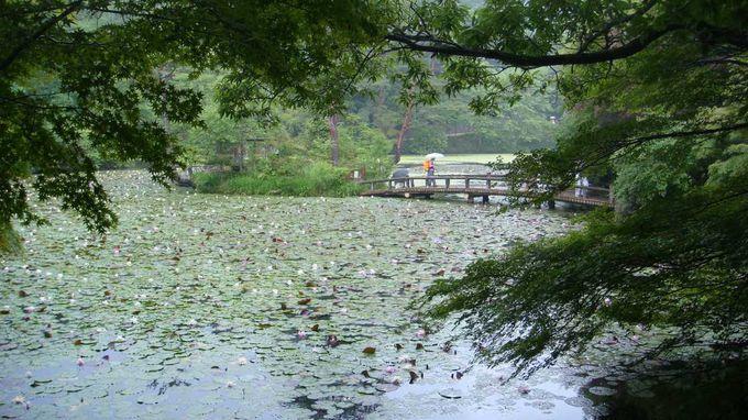 長谷池での〜んびり