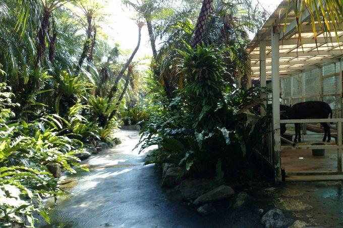 熱帯植物が茂る沖縄っぽい散策路も!