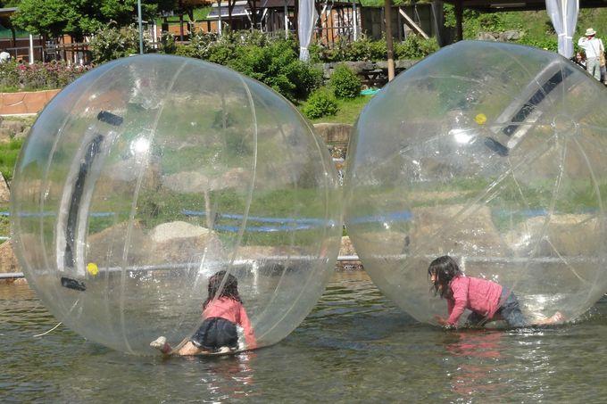 水のエリアでの一番人気は、水の上を歩けるアクアボール